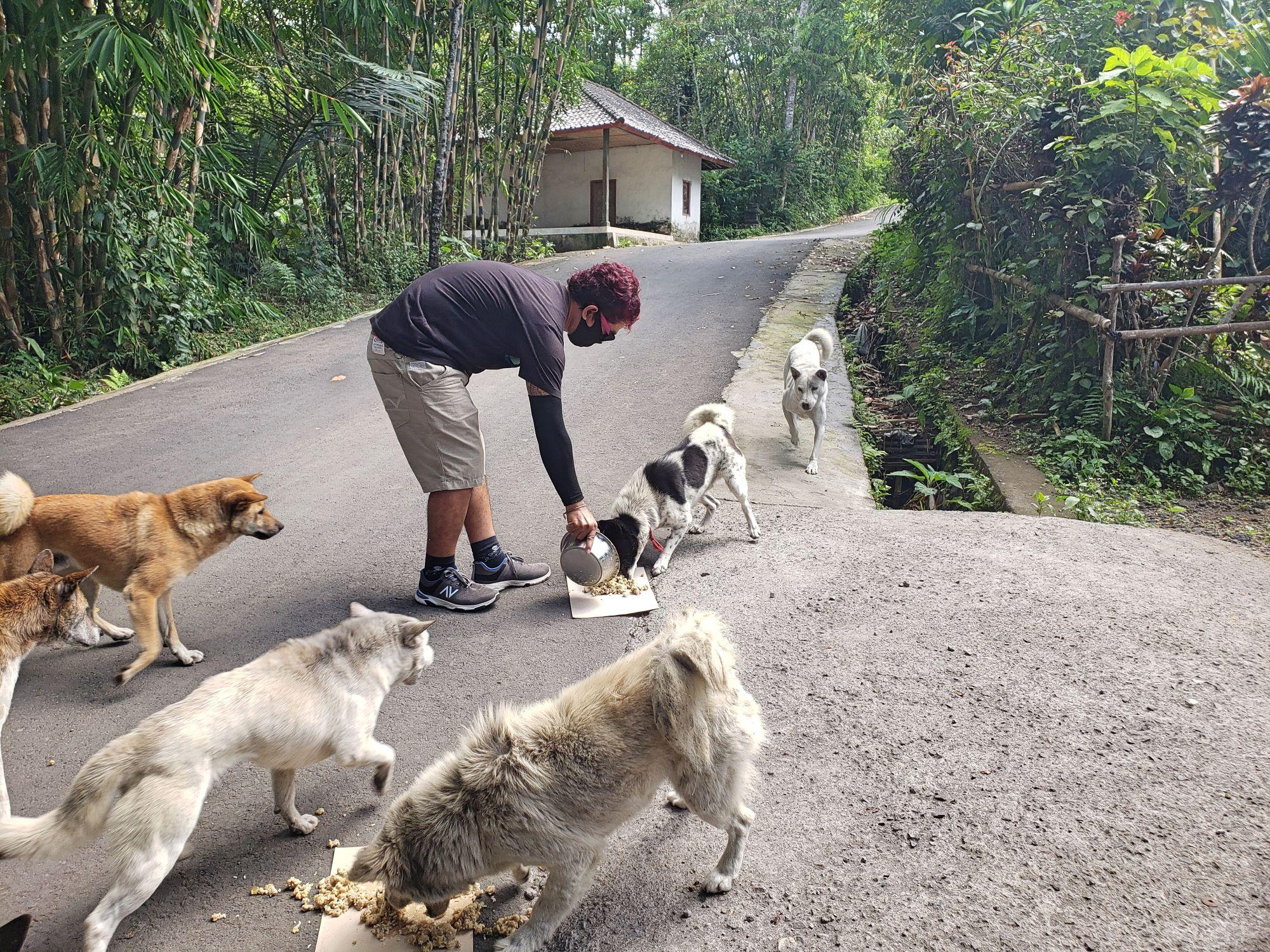 Fütterungsprojekt mit lokaler NGO versorgt Hunde und Katzen, die sich normalerweise aus Abfällen der Tourismusindustrie ernähren - und schützt sie vor brutalen Händlern © VIER PFOTEN | Bali Animal Welfare Association